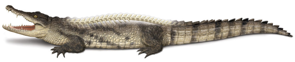 Crocodile_1500px