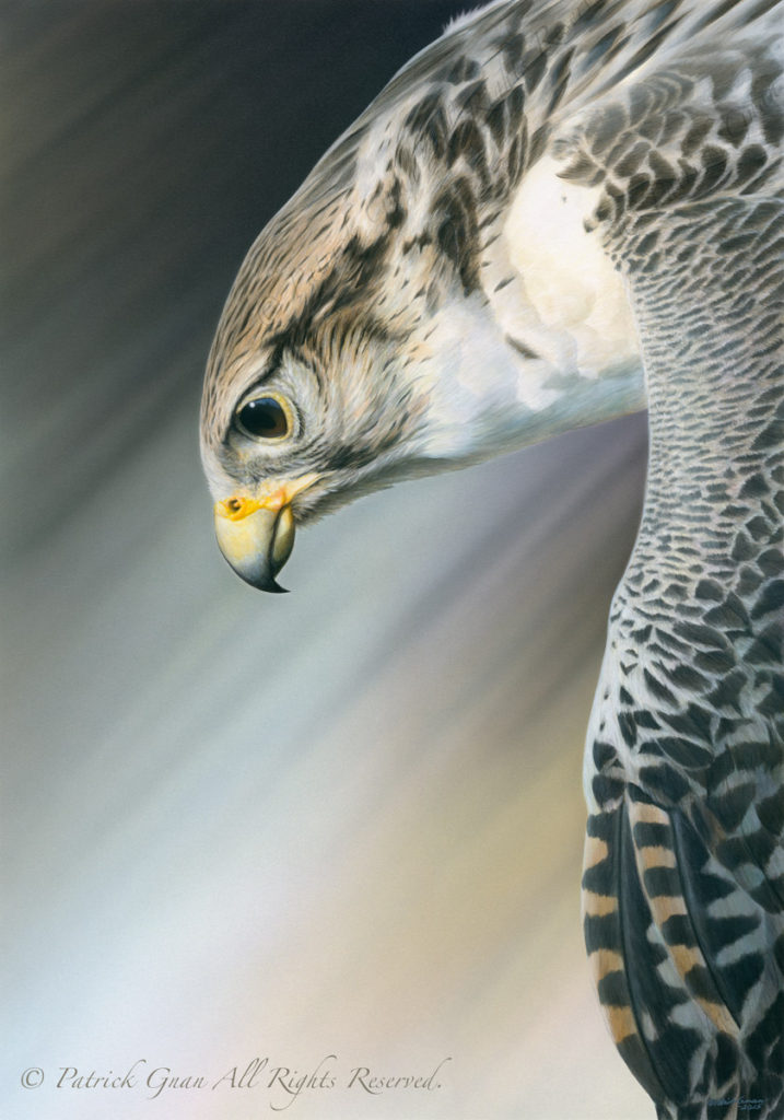 Giclée print of an original acrylic painting of a Gyr Falcon by Patrick Gnan