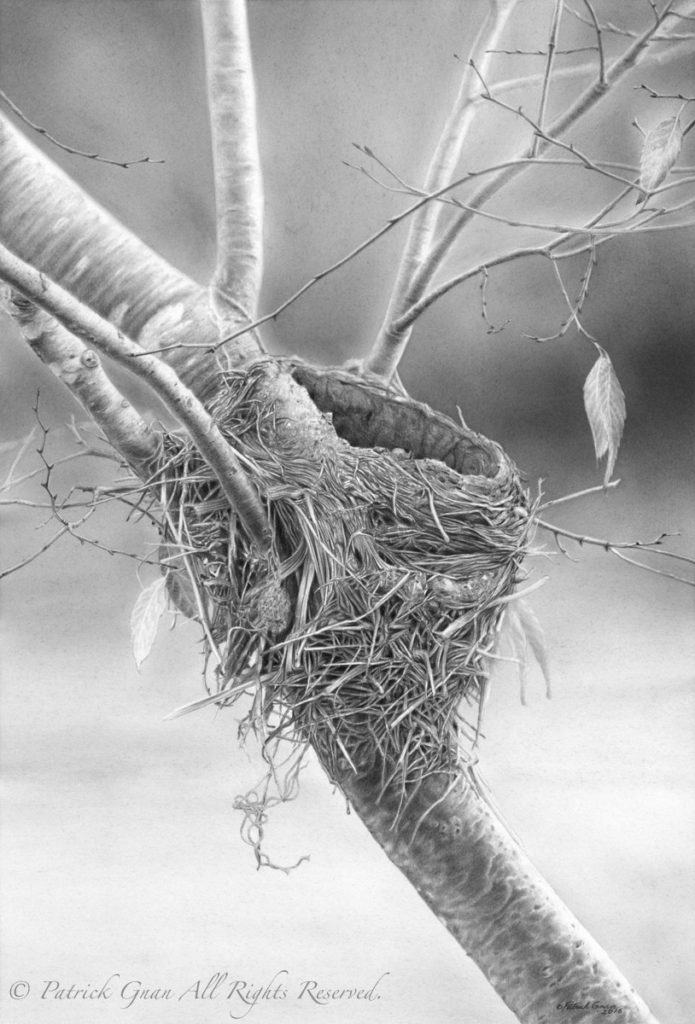 Original pencil drawing of a Bird Nest by Patrick Gnan.