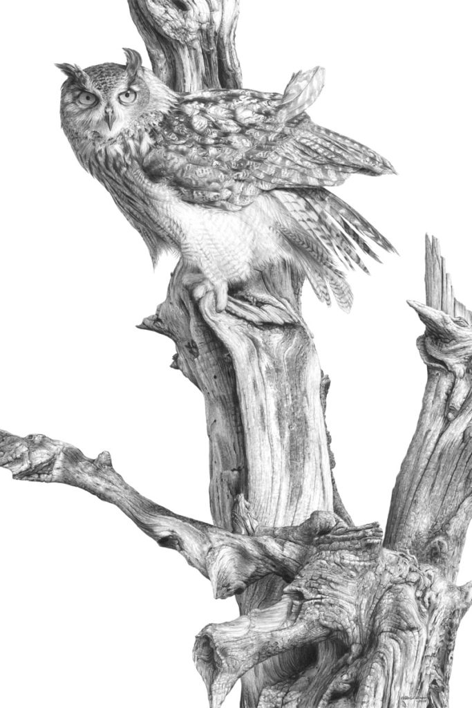 Original pencil drawing of an Eagle Owl by Patrick Gnan.
