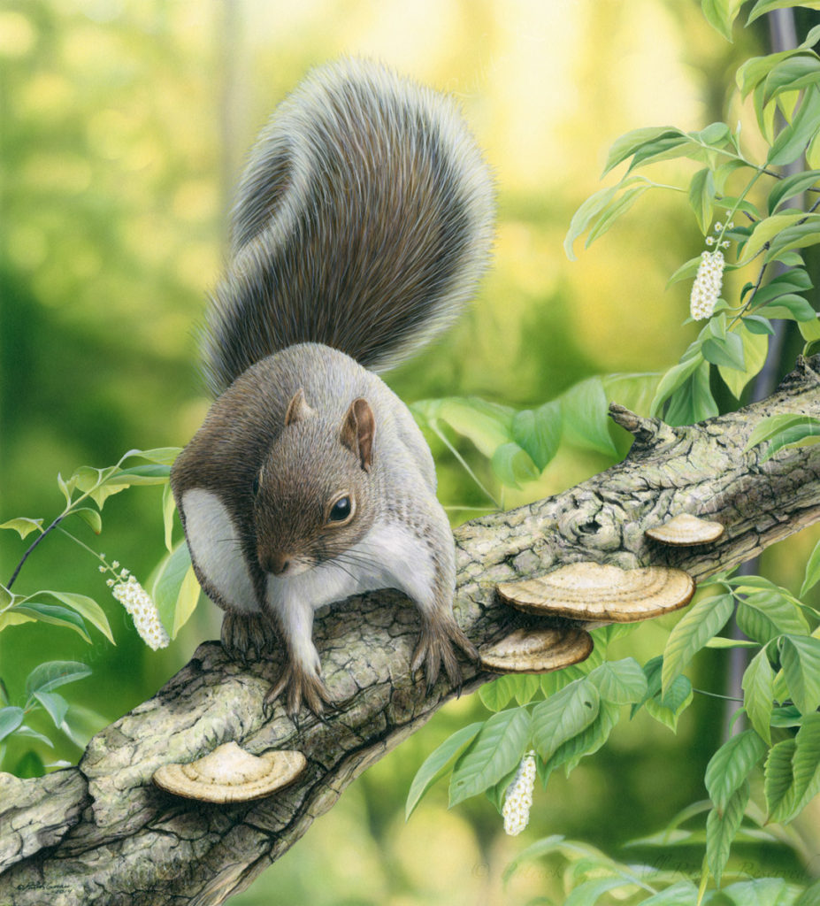 Original acrylic painting of a Gray Squirrel by Patrick Gnan.