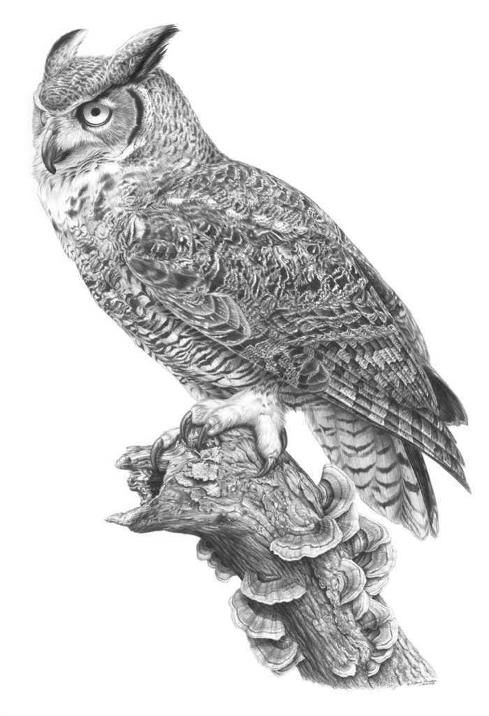 Original pencil drawing of a Great Horned Owl by Patrick Gnan.